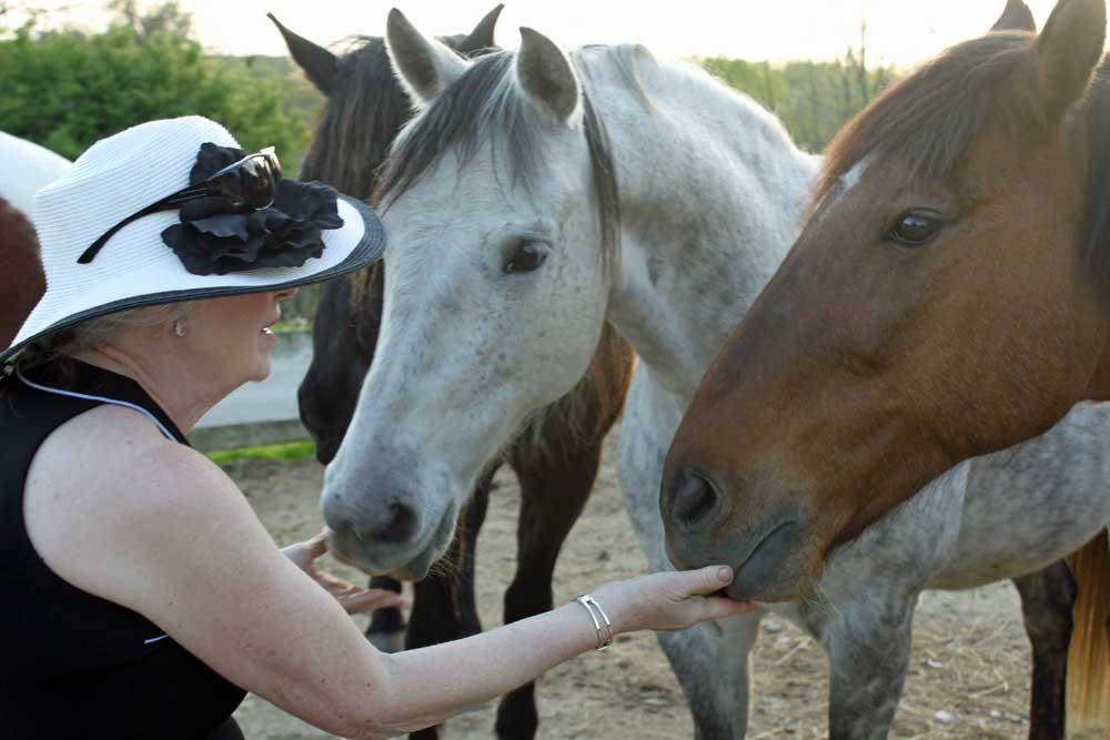 ride horses Kentucky, horseback riding, trail rides, Cincinnati