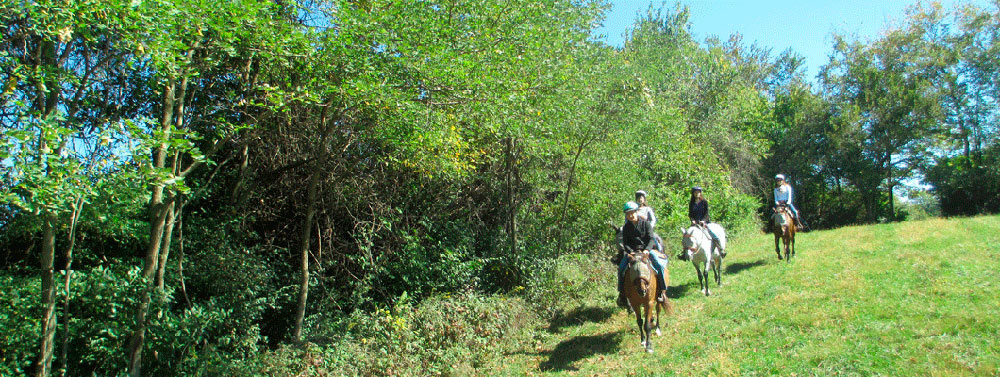 Ride happy, healthy horses at First Farm Inn Cincinnati, Kentucky