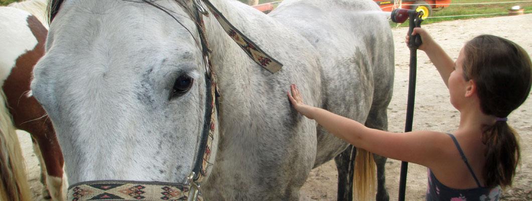 Ride horses at First Farm Inn Cincinnati,  Horseback riding in Kentucky