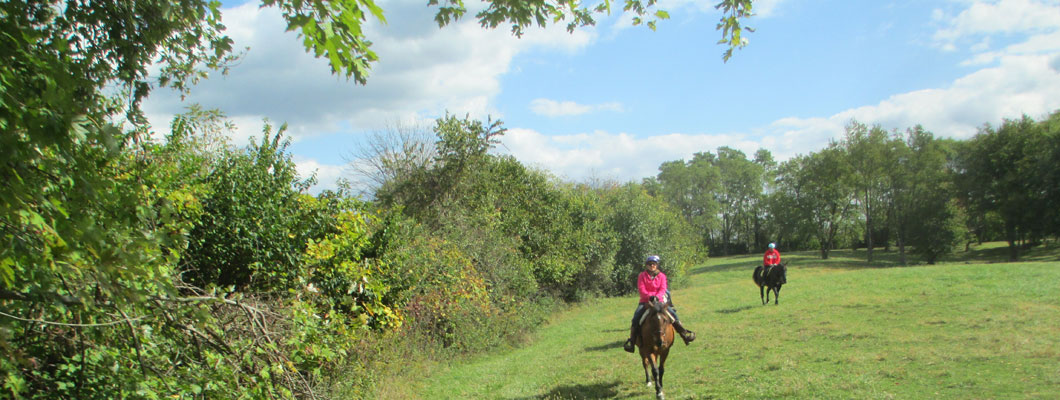 Ride horses at First Farm Inn Cincinnati, horseback riding Kentucky