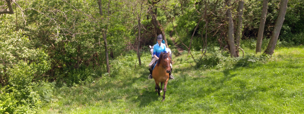 ride horses, kentucky bed breakfast, farmstay, cincinnati, horseback riding
