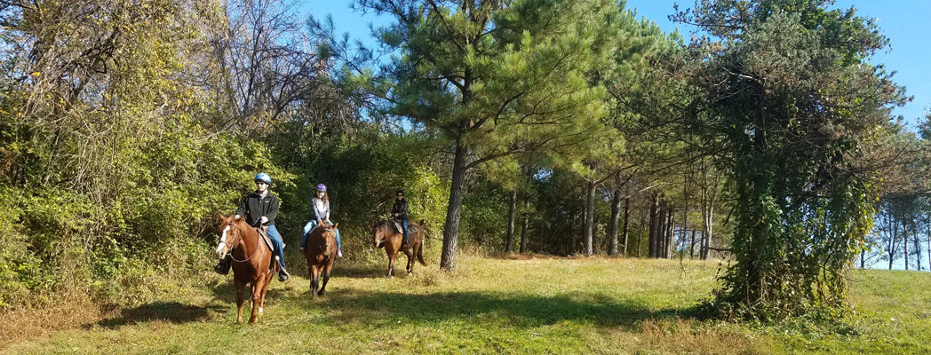 ride horses kentucky, trail ride, horseback riding, horse riding lessons